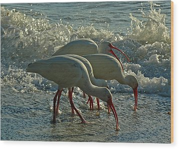 Ibises Wood Print by Juergen Roth