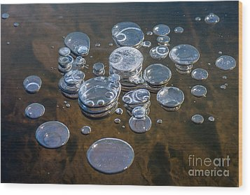 Ice Coins On The Water Wood Print