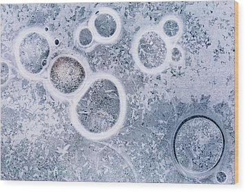 Wood Print featuring the photograph Ice Pattern Five by Davorin Mance