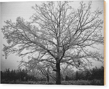 Ice Tree Wood Print