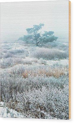 Ice Tree Shenandoah National Park Wood Print by Thomas R Fletcher