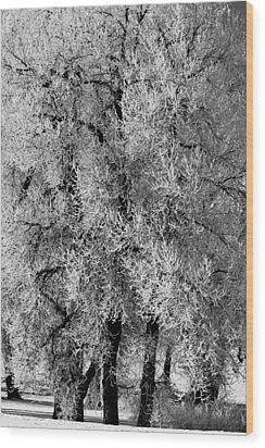 Iced Cottonwoods Wood Print by Colleen Coccia