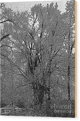 Iced Tree Wood Print