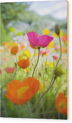 Iceland Poppies Wood Print by Silke Magino