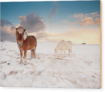 Icelandic Horses On Winter Day Wood Print by Ingólfur Bjargmundsson
