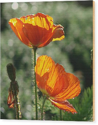 Icelandic Poppies Wood Print