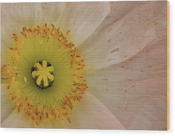 Wood Print featuring the photograph Icelandic Poppy by Roger Mullenhour