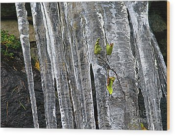 Wood Print featuring the photograph Icicles by Sharon Talson