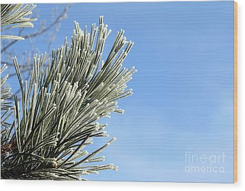 Wood Print featuring the photograph Icing On The Needles by Michal Boubin
