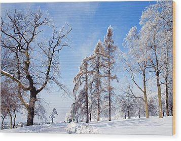 Wood Print featuring the photograph Icy Frosting by Timothy McIntyre
