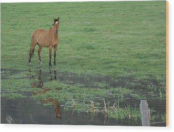 Idaho Farm Horse1 Wood Print by Cynthia Powell