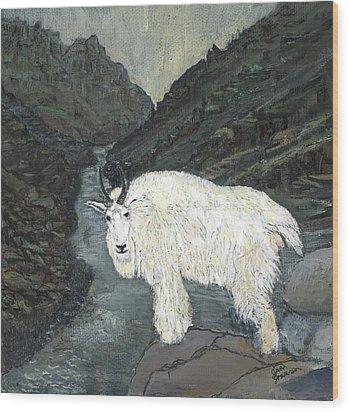 Idaho Mountain Goat Wood Print by Sara Stevenson