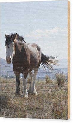Idaho Work Horse 2 Wood Print by Cynthia Powell