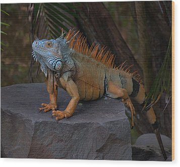 Wood Print featuring the photograph Iguana 2 by Jim Walls PhotoArtist