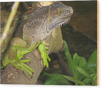 Wood Print featuring the photograph Iguana - A Special Garden Guest by Christiane Schulze Art And Photography