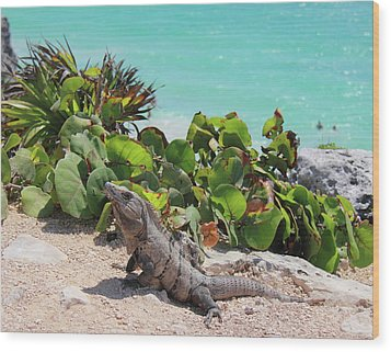 Iguana At Tulum Wood Print by Roupen  Baker