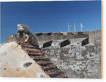 Iguana Basking On The Wall Of The San Cristobal Fort San Juan Puerto Rico. Wood Print by George Oze