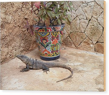 Wood Print featuring the photograph Iguana by Dianne Levy