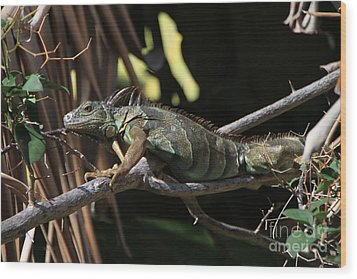 Wood Print featuring the photograph Iguana by Edward R Wisell