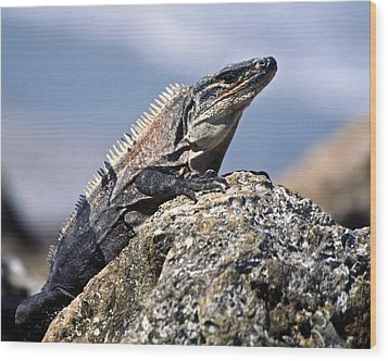 Wood Print featuring the photograph Iguana by Sally Weigand
