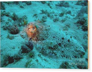 Illuminated Eye Of A Common Cuttlefish Wood Print by Sami Sarkis