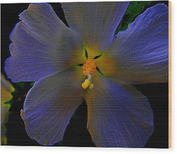 Illuminated Flower Wood Print by Martin Morehead