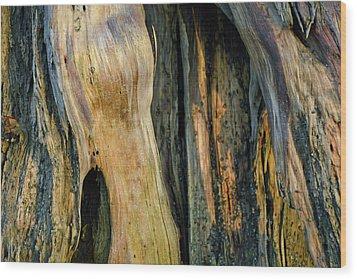 Illuminated Stump 03 Wood Print by Bruce Gourley
