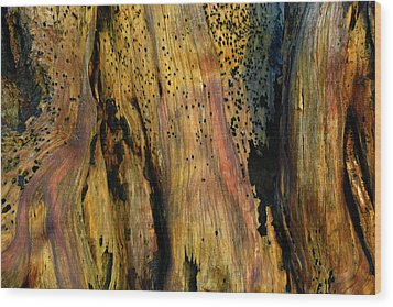Illuminated Stump Wood Print by Bruce Gourley