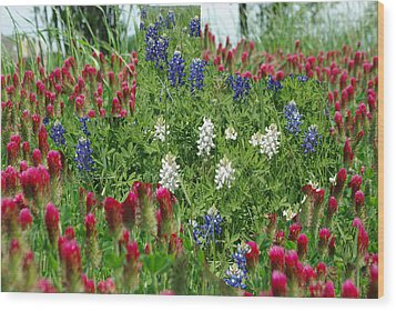 Illusions Of Texas In Red White Blue Wood Print by Robyn Stacey