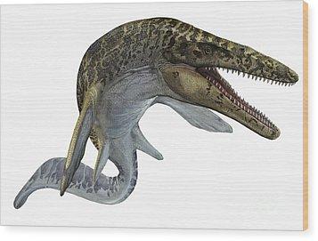 Illustration Of A Mosasaurus Wood Print by Sergey Krasovskiy