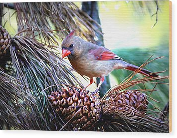 Img_0311 - Northern Cardinal Wood Print by Travis Truelove