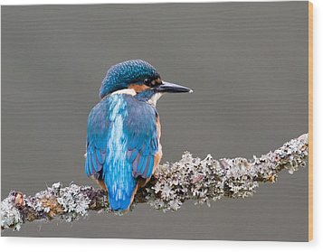 Wood Print featuring the photograph Immature Common Kingfisher by Phil Stone