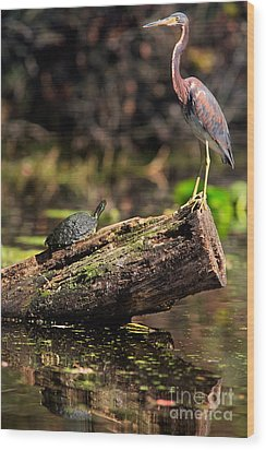 Immature Tri-colored Heron And Peninsula Cooter Turtle Wood Print by Matt Suess