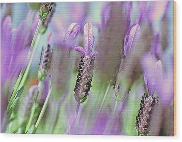 Impressionist Lavender Wood Print