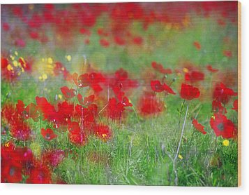 Impressionistic Blossom Near Shderot Wood Print