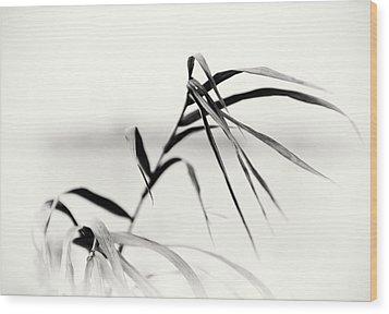 Impressions Monochromatic Wood Print by Tomasz Dziubinski