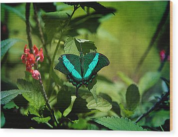 In A Butterfly World Wood Print