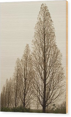 In A Row Wood Print by Elvira Butler