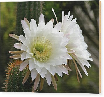 Wood Print featuring the photograph Cactus Blossoms by Melanie Alexandra Price