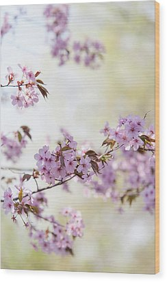 Wood Print featuring the photograph In Bloom. Spring Watercolors by Jenny Rainbow