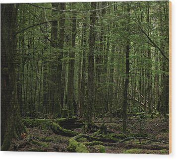 In Fangorn Forest Wood Print