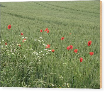 in Flanders Fields the  poppies blow Wood Print
