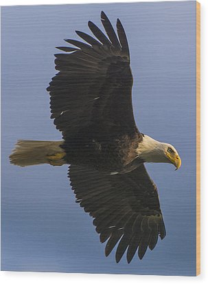 Wood Print featuring the photograph In Flight by Gary Lengyel
