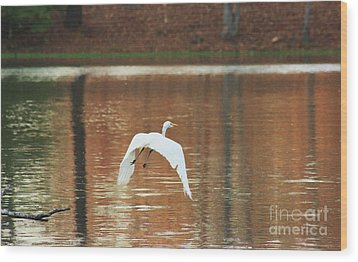 Wood Print featuring the photograph In Flight by Kim Henderson