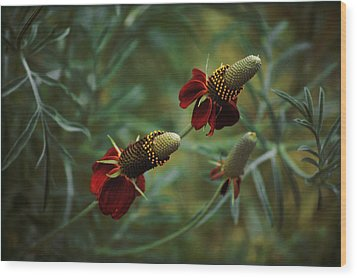 Wood Print featuring the photograph In Rousseaus Garden by Douglas MooreZart