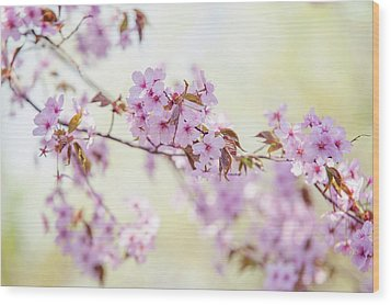 Wood Print featuring the photograph In Tender Bloom. Spring Watercolors by Jenny Rainbow