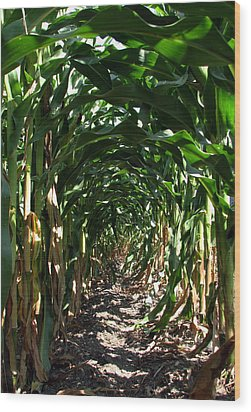 In The Corn  Wood Print by Joanne Coyle