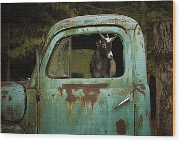 In The Drivers Seat Wood Print