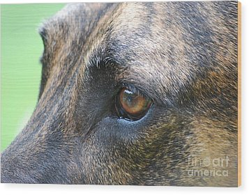 Wood Print featuring the photograph In The Eyes Of A Dog by Lila Fisher-Wenzel