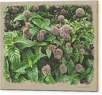 Wood Print featuring the photograph In The Highline Garden by Joan  Minchak